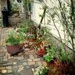 太平寺の庭