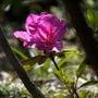 庭、今日は穏やかな日…
