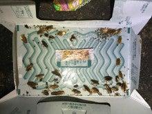ゴキブリ 駆除 業者