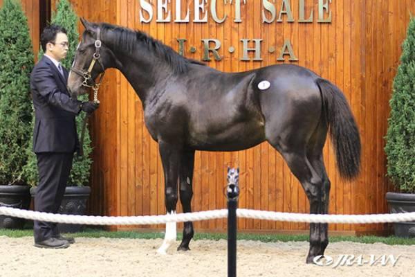 満を持して三代目登場 | Horse Racing of LIFE 競馬という名の癒しの空間