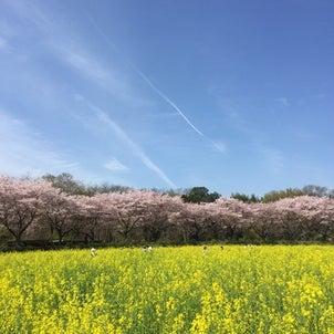 巾着田と清雲寺(その②)の桜♡の画像