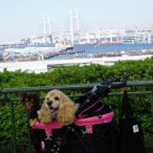 横浜1日目♪港の見え…