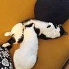 モフ寝の画像