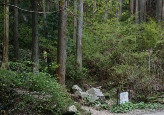 金剛山のけもの道