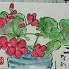 お花でまちづくり・・・・No.970の画像