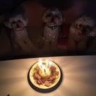 トイプードル・ルイ5才のお誕生日♡の記事より