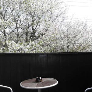 待ちにまった5月 新緑の春の画像