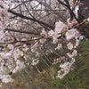 北海道。の画像