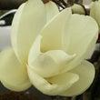 白木蓮と桃の花