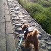 気持ちいい朝散歩の画像