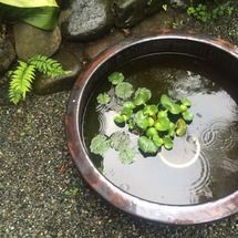 鎌倉の雨、糸かけ曼荼…