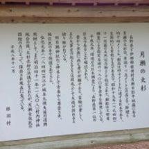 茶臼山の芝桜の草原、…