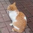 雨宿りの猫