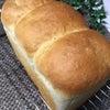 白神こだま酵母の湯種食パンの画像