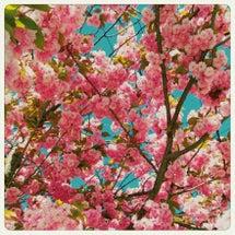 桜を逃した今年。