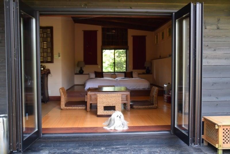 姫路市でおすすめのペットと泊まれるホテル 【ト …