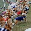 「静岡DEコーギー祭…