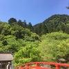 風薫る5月の日本のハーブの画像