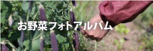 お野菜フォトアルバム