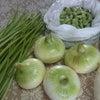 今月の野菜の画像