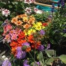 マンション花壇の植栽の記事より