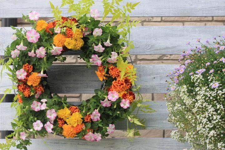 マリーゴールド、ペチュニア花寄せ植え