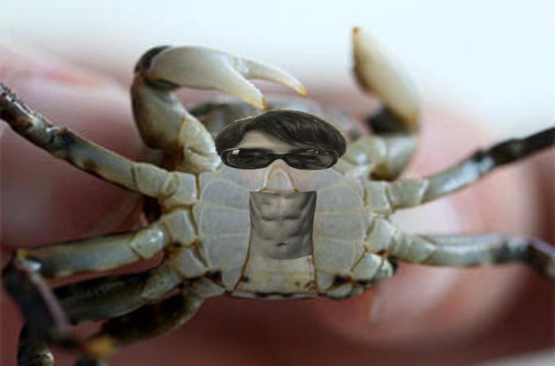 甲殻類」の検索結果 - Yahoo!検...
