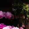 花は花の画像