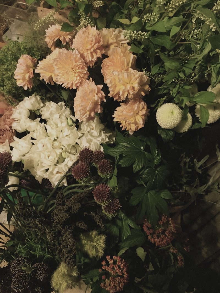 26日の花