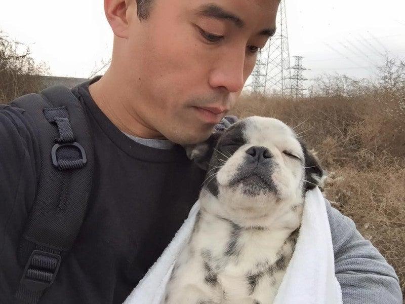 Картинки по запросу marc ching animal rescue