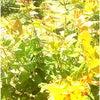 花とねこ の画像