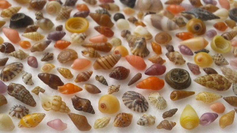 御前崎の貝殻280604s1.jpg