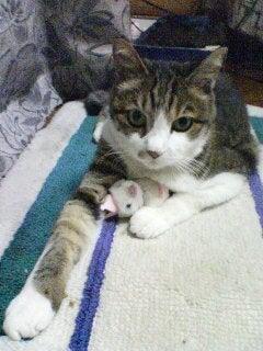 気功 動物 ペット どうぶつ 胸水 治療 体験談 猫 にゃんこ ネコ ふくちゃん