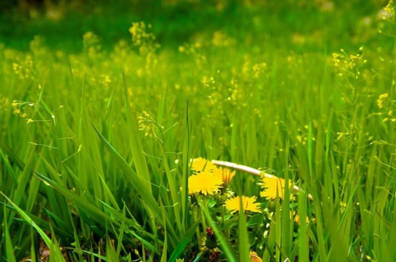 清里 春 草原
