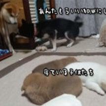 寝ている子犬たちにウ…