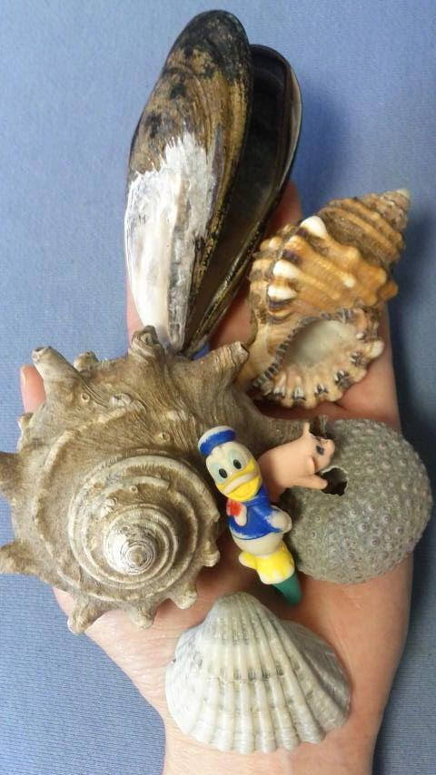 御前崎の貝殻H280604L1.jpg