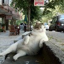 【2016千葉松戸市版】野良猫トラブルにお困りの方へ 一体どうすりゃ?FAQ&地の記事に添付されている画像