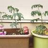 野菜を育てる☆園芸日誌♪の画像