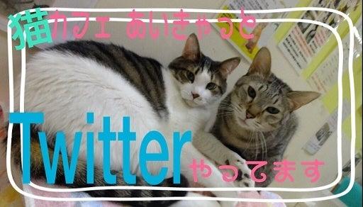 http://ameblo.jp/aicat-fukushima/