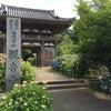 福知山市の観音寺のあじさいの画像