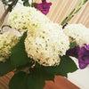 紫陽花の画像