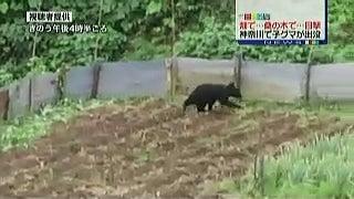 神奈川県・相模原市でもクマ、目撃情報相次ぐ。2016/06/17 ...