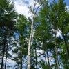 【募集開始】勇気づけ森のほいくえん@八ケ岳 〜8月3日、4日〜の画像