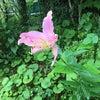咲いた荘の山野草の画像