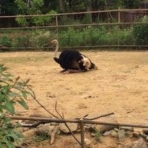 八木山動物園へ行って…