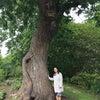 おじいさんの大きな栗の木の画像