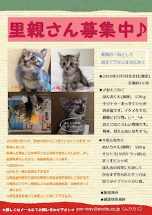 ぽん・めぃ募集ポスター