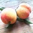 庭の桃の実