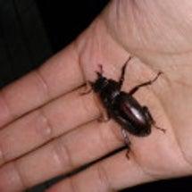 JAHの昆虫担当?