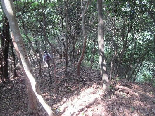 丘の上の歌姫のブログ日浦山~蓮華寺山~高城山 5(高城山)